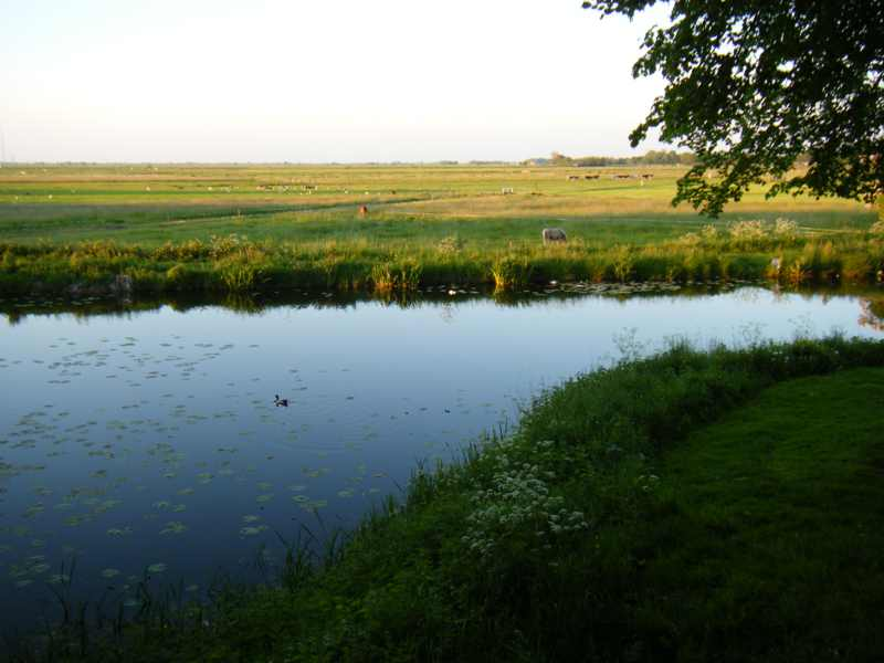 Uitzicht over de polder aan de noordkant van Elburg