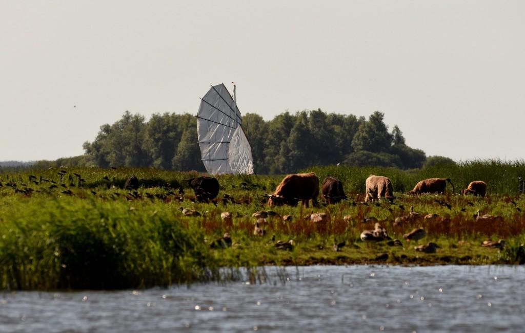 ZeeFier op de Slenk (foto: E. Voss)